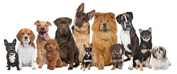 Conoce todas las razas de perros que existen 1