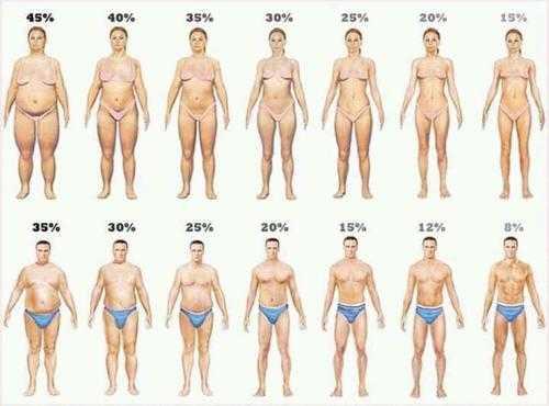 indice de grasa corporal