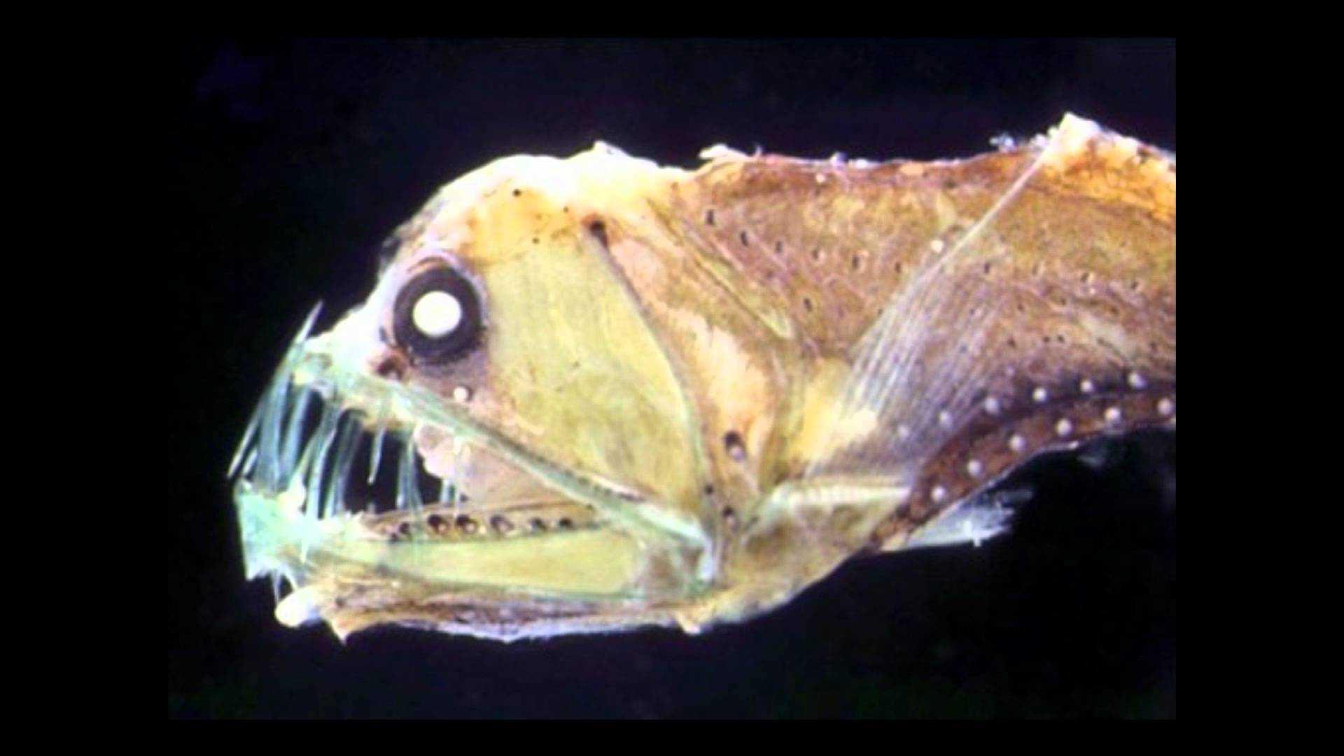 Criaturas marinas que podrían ser las protagonistas de una película de terror 2