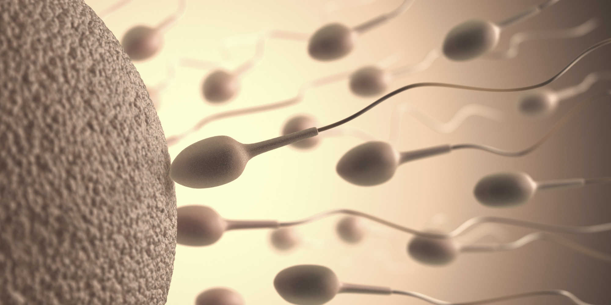 Cuál es la vida media de un espermatozoide 1
