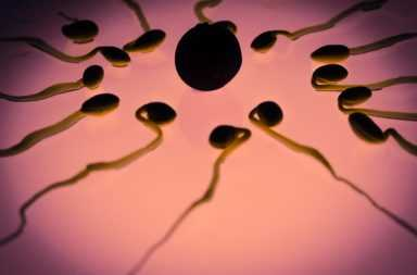 ovulo y espermatozoides