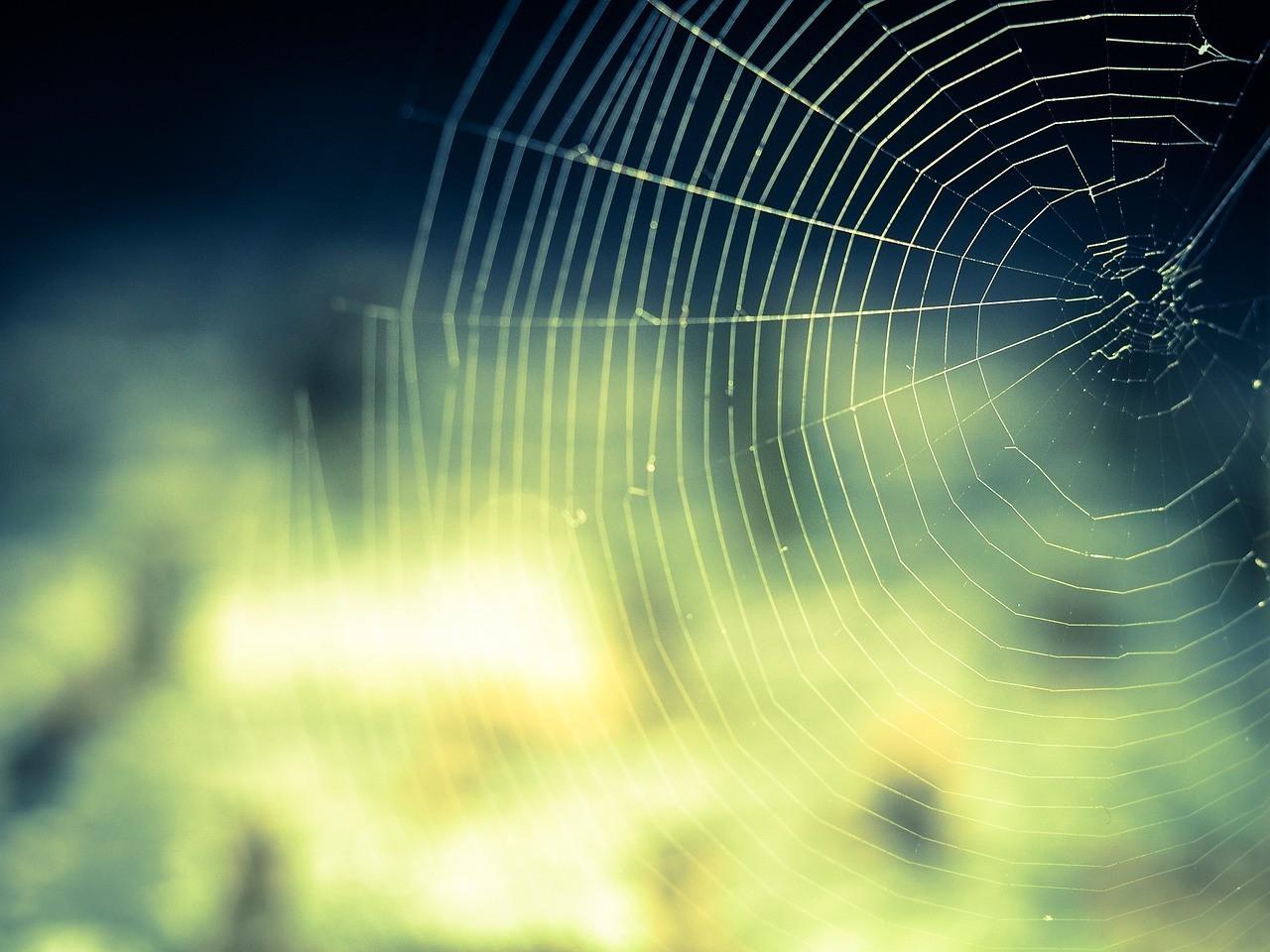 picadura arañas