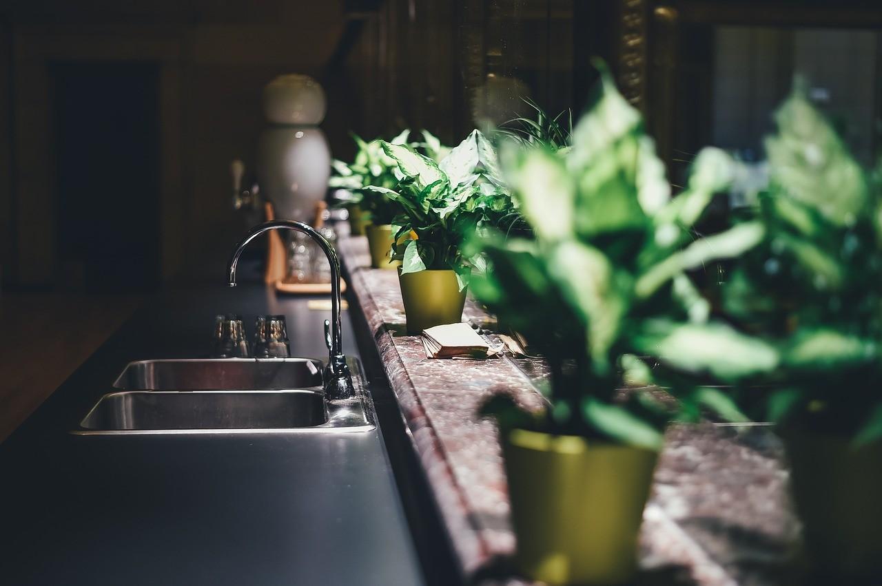 Plantas de interior que necesitan poca luz 1
