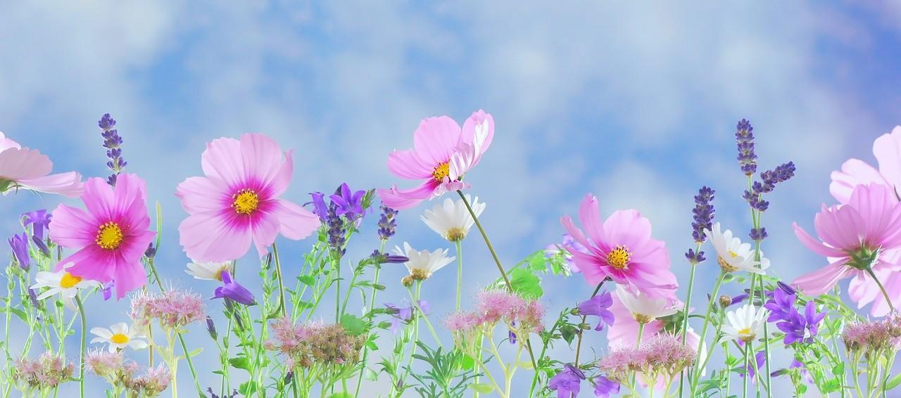 Nombres de niñas inspirados en las flores 1