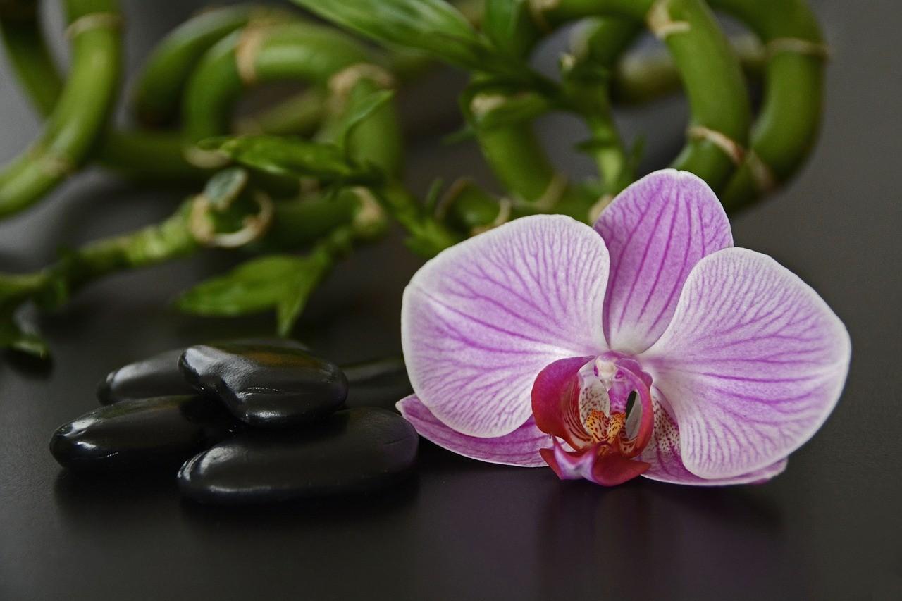 Feng Shui dormitorio: Logra la armonía para un mejor descanso 3