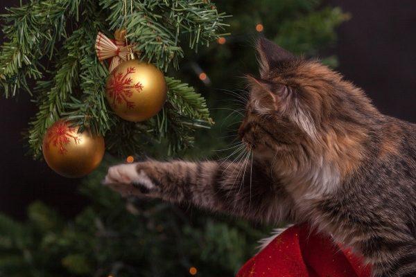 Gato juega com bolas de arbol de navidad