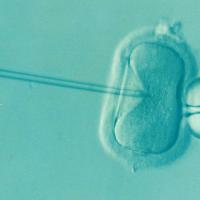 ¿Qué hacer si no se logra el embarazo tras un año de relaciones sexuales regulares? 3