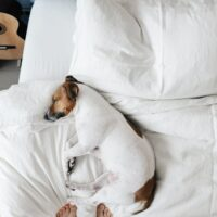 dog, bed, luxery, textile, hotel, pet, room,
